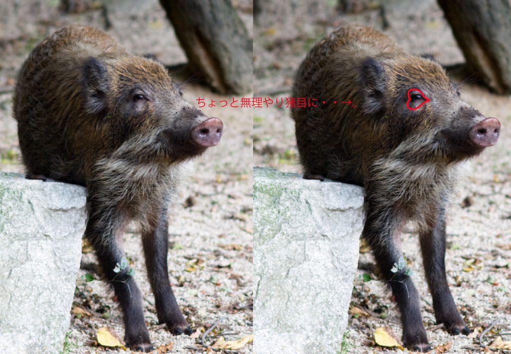 猪目の由来